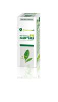Huile Essentielle Bio Ravintsara à JUAN-LES-PINS